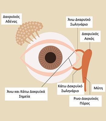 Δακρυϊκή Συσκευή του Οφθαλμού, Θεοδώρα Τσιρούκη, Χειρουργός Οφθαλμίατρος